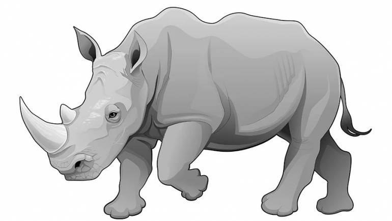 How to See Gray Rhinos